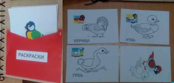 Картинки для раскрашивания по теме «Птицы»