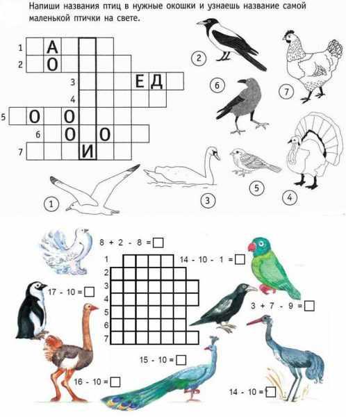 Кроссворды на тему птиц