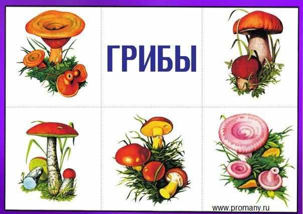 назови одним словом грибы